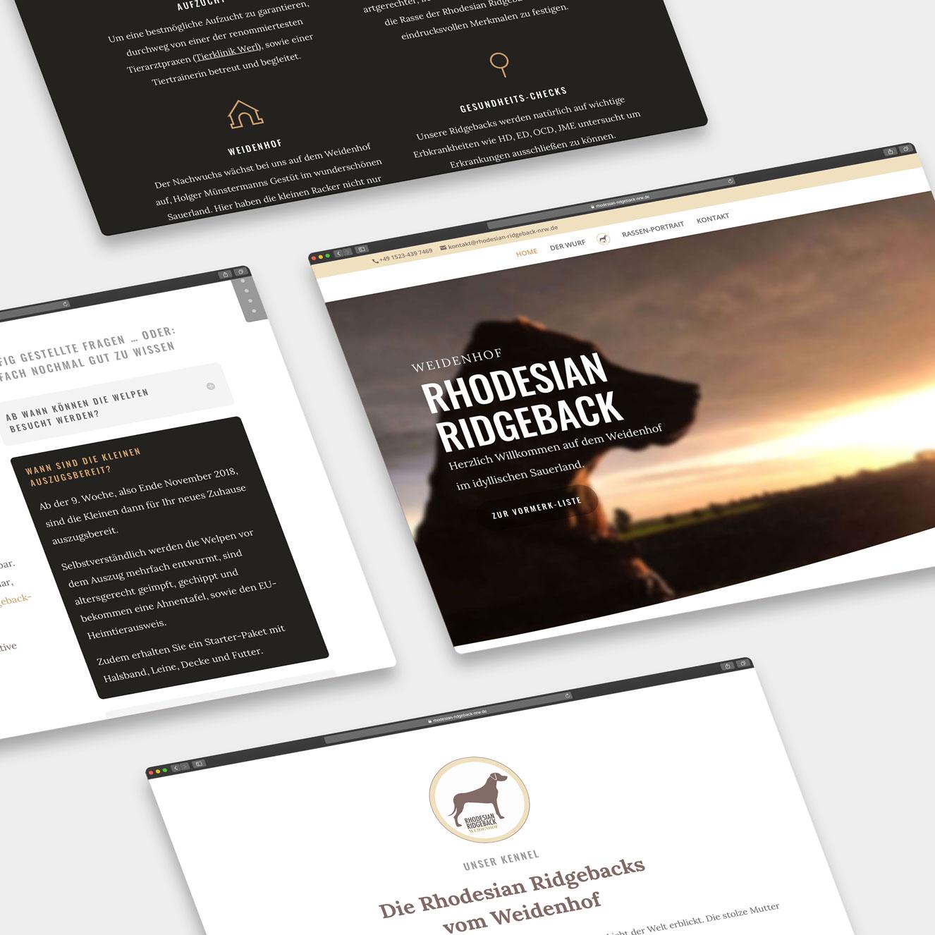 1313 multimedial Grafikdesign Webdesign Sauerland Arnsberg rr